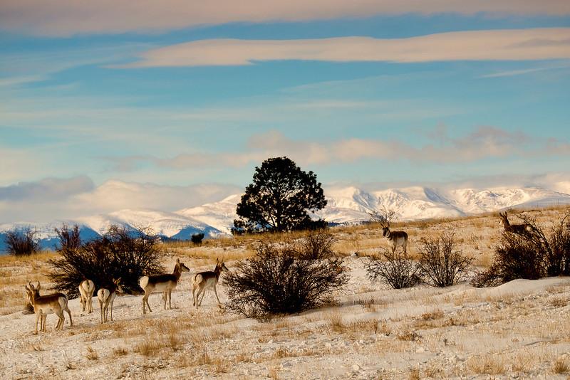 Collegiate range and Antelope: Colorado