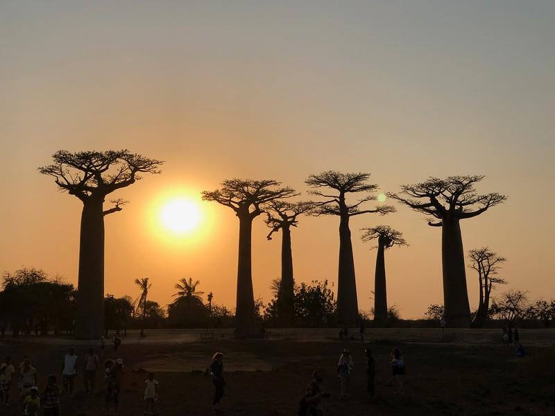 Baobob Trees at Sunset