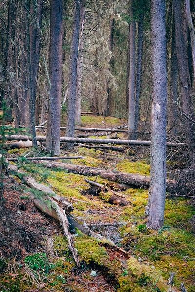 Spruce Pass