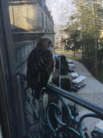 The Hawk - December 18, 2014