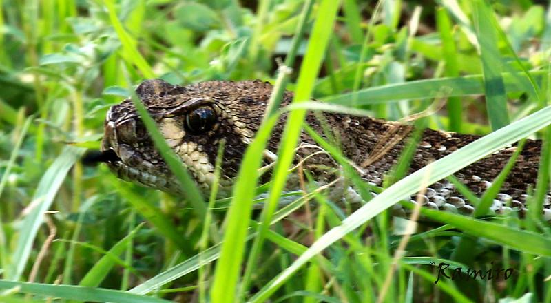 Rattlesnake July 2015 Vacation 336.jpg