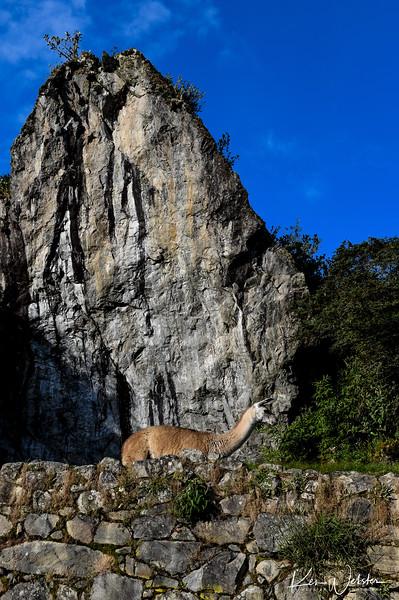 2018 Machu Picchu-91.jpg