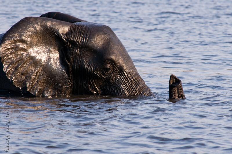 elephants (12).jpg