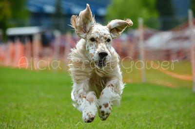 FCAT Inland Gazehound Fanciers May 25, 2019