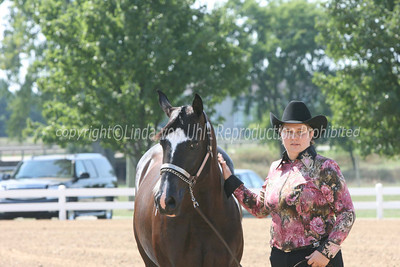 Halter and Showmanship