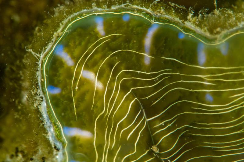 clam-4947.jpg