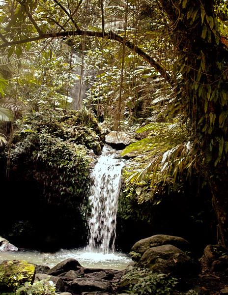 Puerto Rico pond .jpg