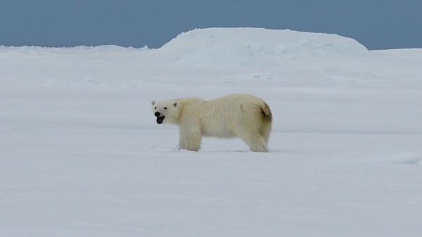 2016 Polar Adventure