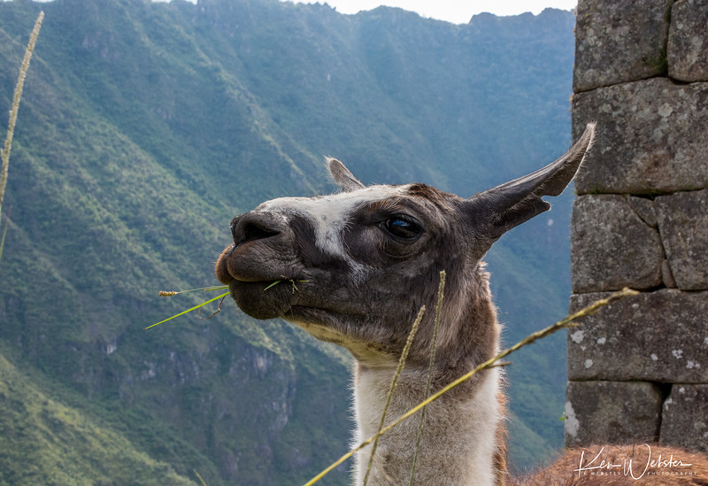 2018 Machu Picchu-88.jpg