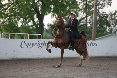 18. Three Gaited - Novice