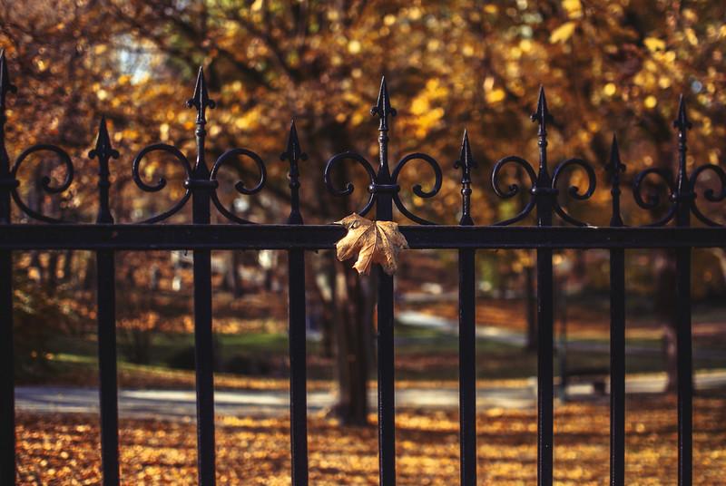 autumn fence front.jpg
