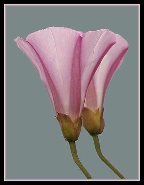 4844 Pink Flowers.jpg