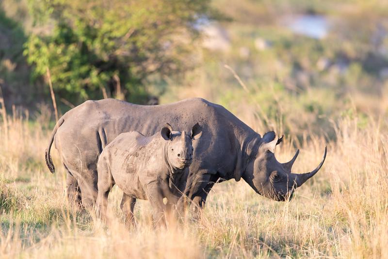 Africa - 101216 - 2203.jpg