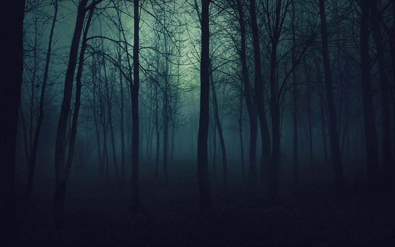 wood_trees_gloomy_fog_haze_darkness_50175_3840x2400.jpg