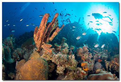 Bonaire '13