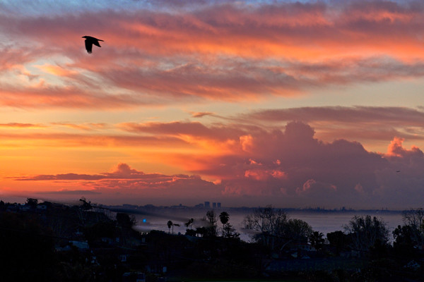 January 24 - Sunrise with a bird and plane and orange clouds.jpg