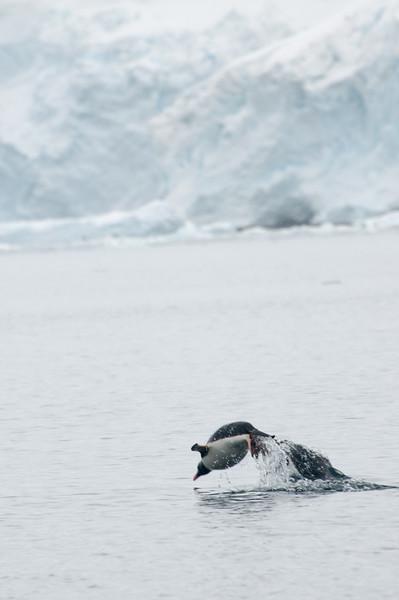 Antarctica 2015 (79 of 99).jpg