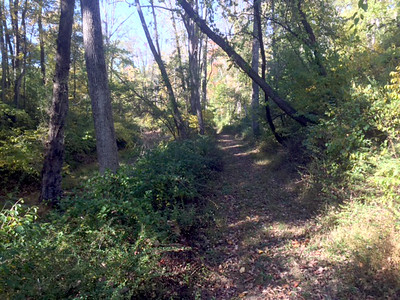 Towpath Clearing Fall 2016