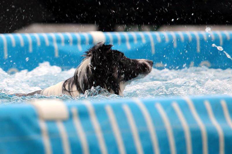 2015.8.7 Winnebago County Fair Dock Dogs (28).JPG