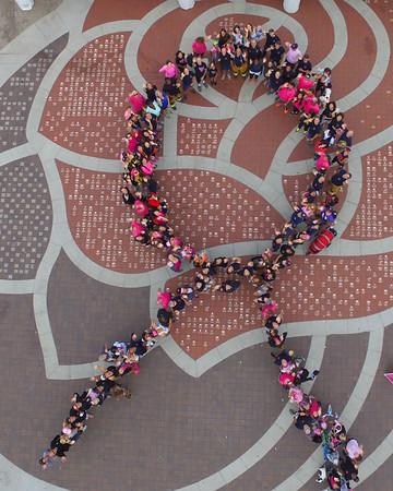 Pasadena Goes Pink