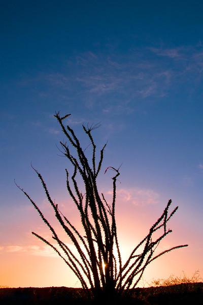 Anza-Borrego ocotillo sunrise 6116 copy.jpg