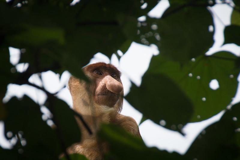 Borneo-2014-163.jpg