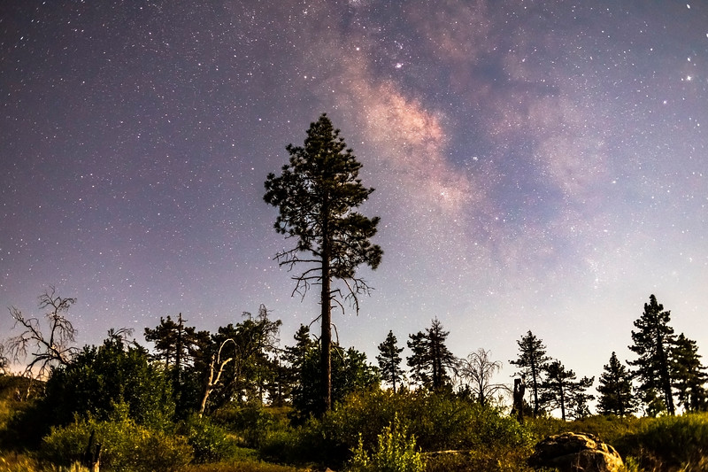Pine Trees and the Milky Way in Mount Laguna During a 63% Moon