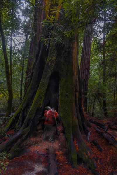 Haunted tree trunks