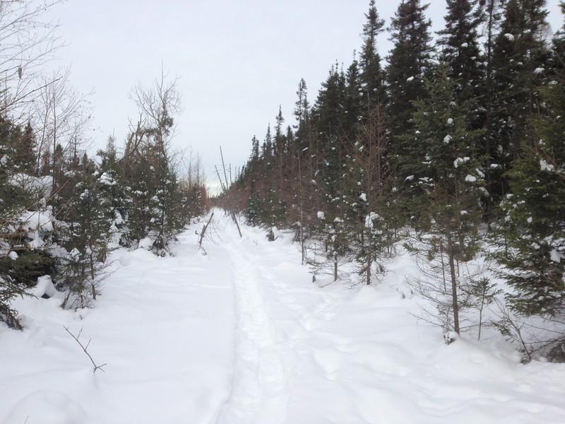 Snowshoe trail Owl Ave Sax-Zim Bog MN IMG_4902.jpg