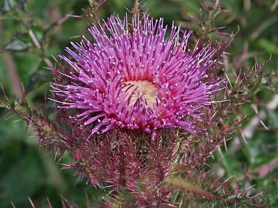 Wildflower Species