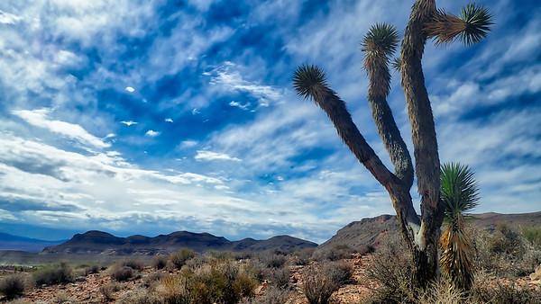 """Nevada""""s Desert"""