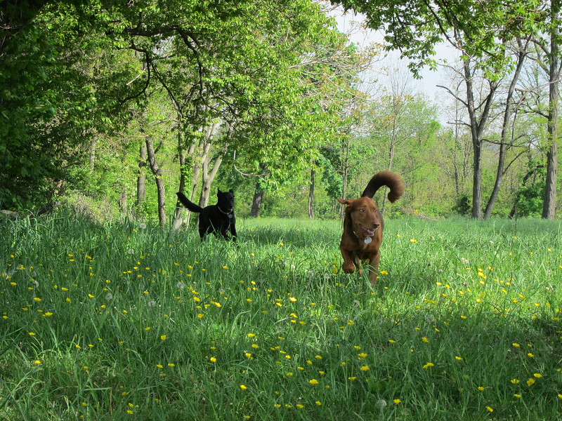 Asher and General romping