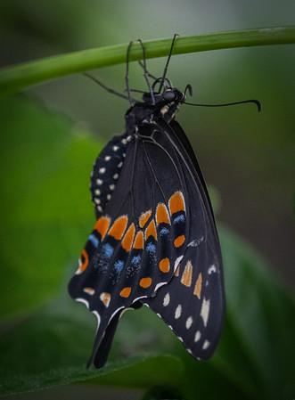 Lukas Nursery & Butterfly Encounter- Oveido, FL