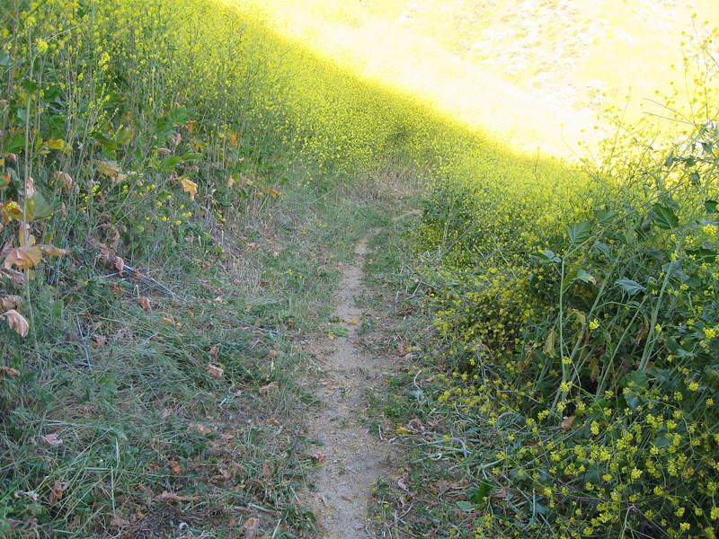 20080417009-New Millenium Trail, trailwork.JPG