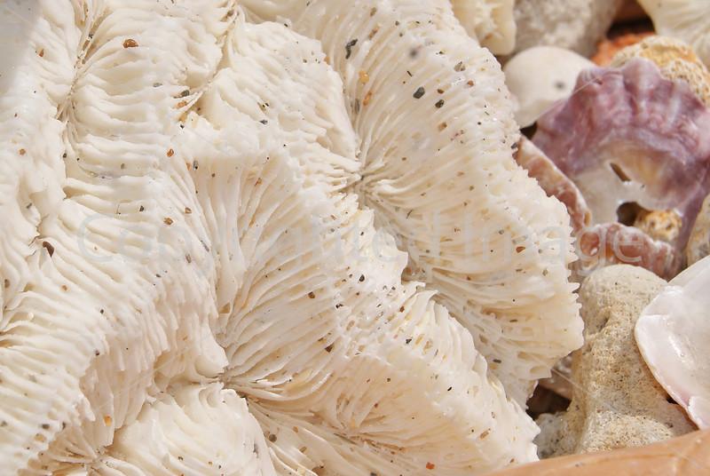 #106 White Coral.JPG