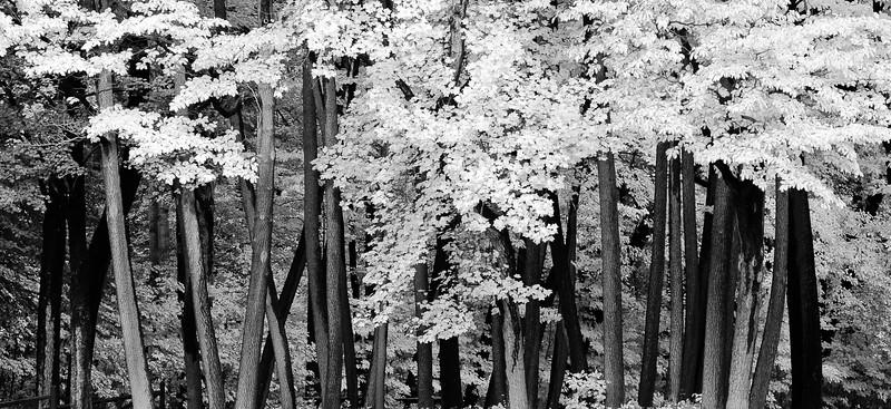 20091017_rocky_river_reservation_006bw2.jpg