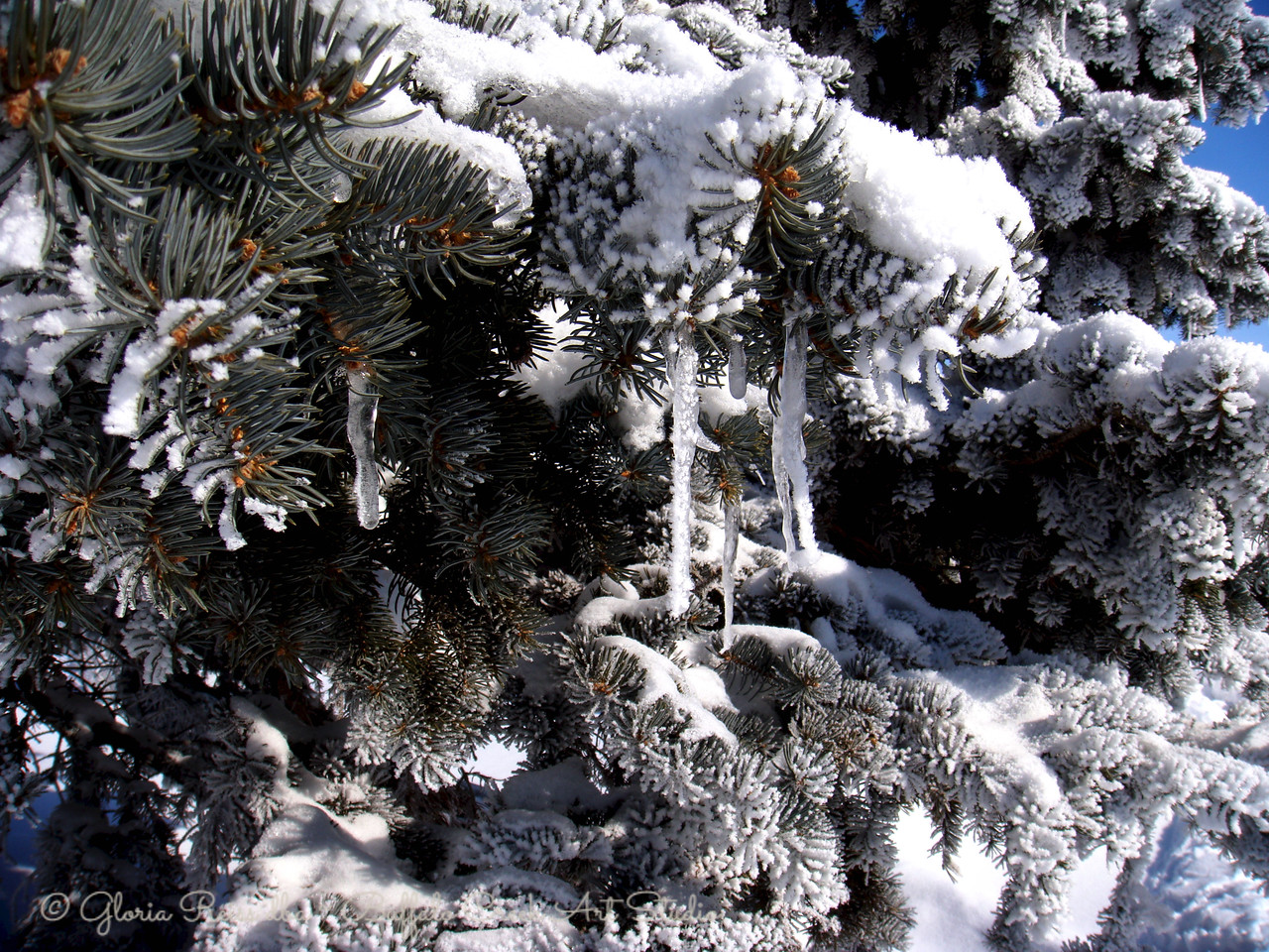 rain and snow make art out of the trees
