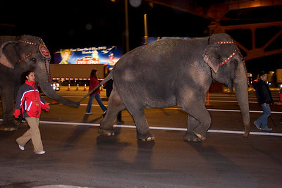Ringling Bros. Elephants in Midtown Tunnel.3.26.07