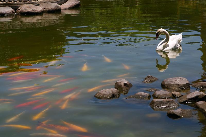 Stop looking at us, swan!