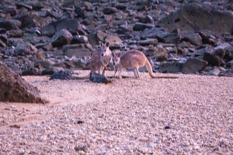 Australia_479.jpg