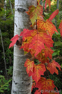 Fall colors in the Acadian Forest
