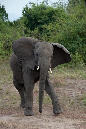 Uganda, February 2011