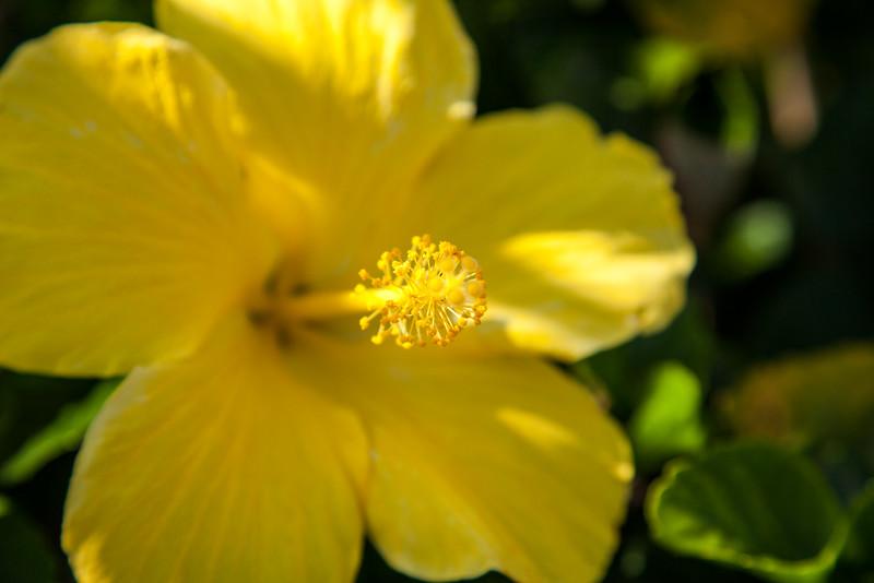 cool-flower-photography-3.jpg