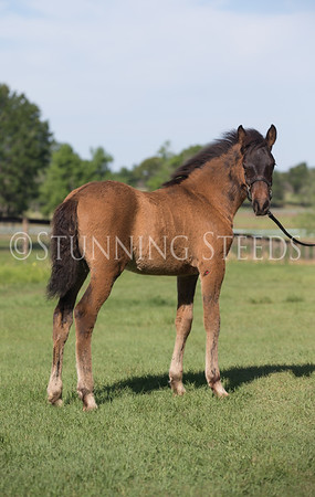 Prado DM-3mo old colt