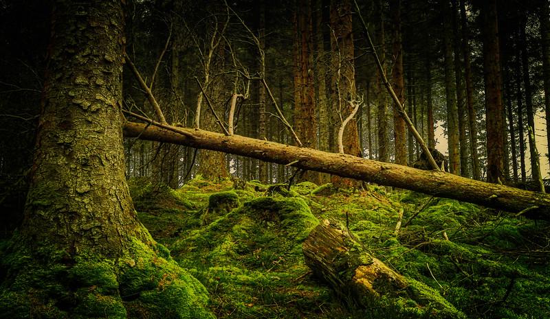 Forest Shadows-128.jpg