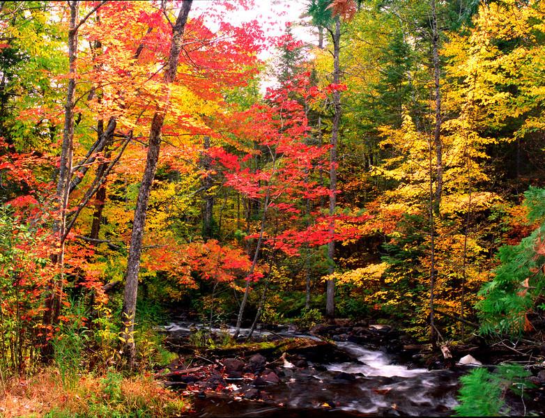 US - MN - Tait Creek fall color 8x10 Hi Res.jpg
