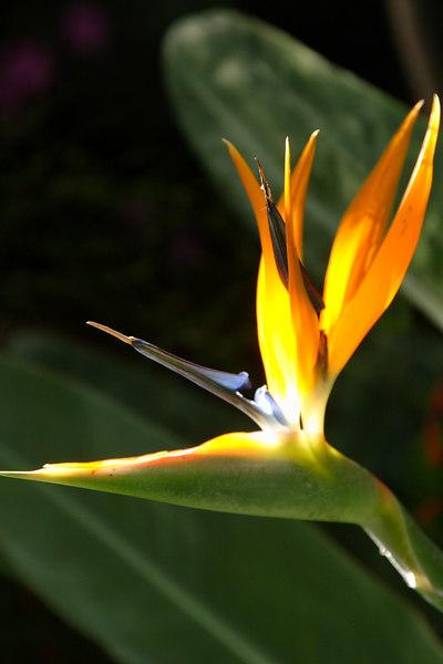 Hawaii 077.JPG