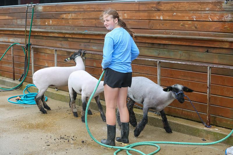 Sheep Show-16.jpg