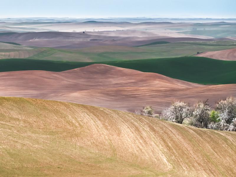 Palouse Prairie Vista