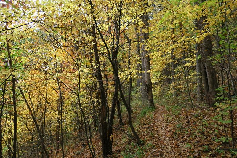 Farlow Gap Trail -- 3,840'